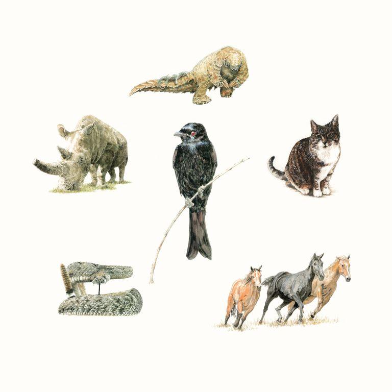 Album artwork of '1' by Drongo